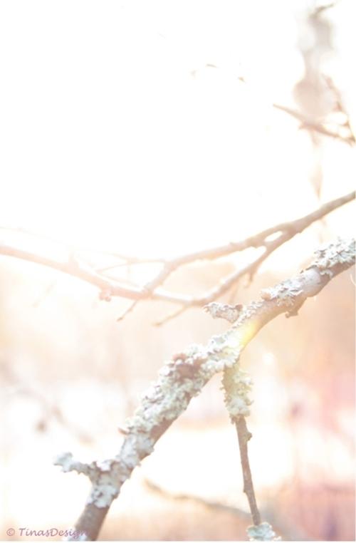Serene Light post
