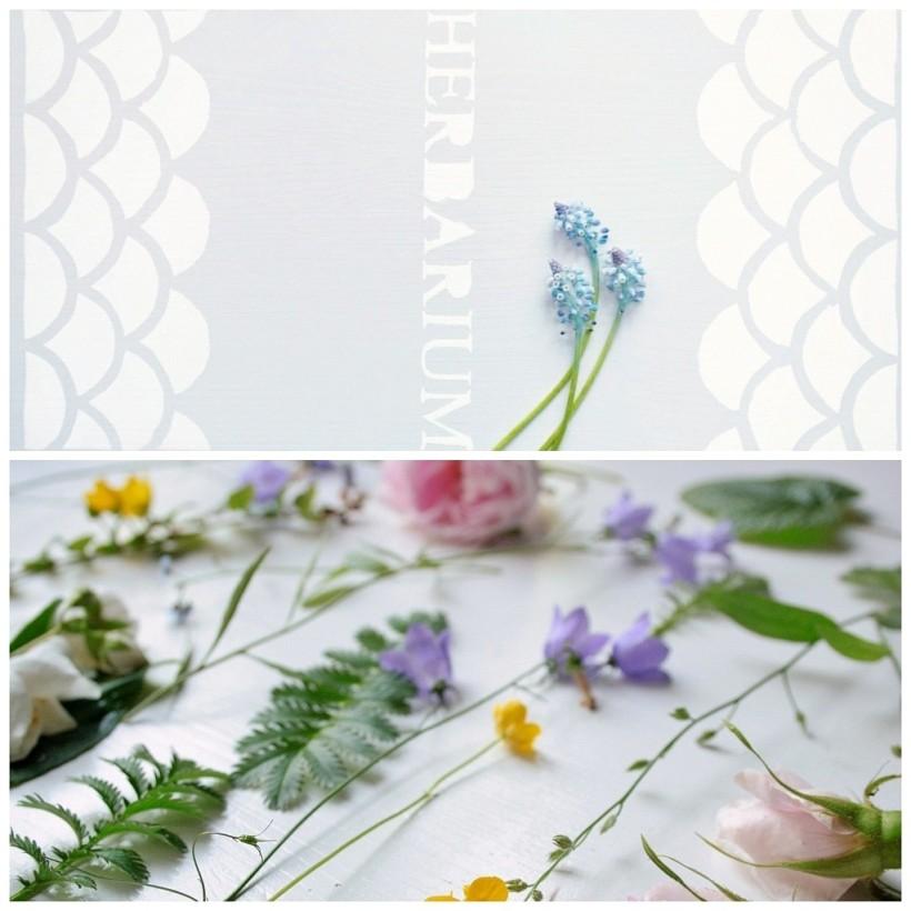 herbarium-ja-kukat